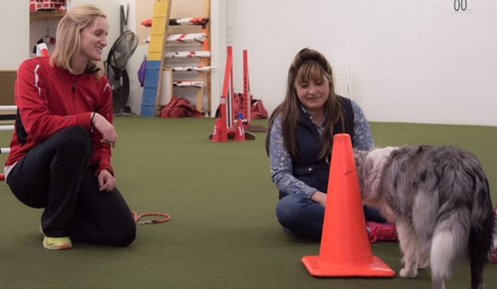 Jenn teaching a student at IncrediPAWS Dog Agility in Columbus, Ohio